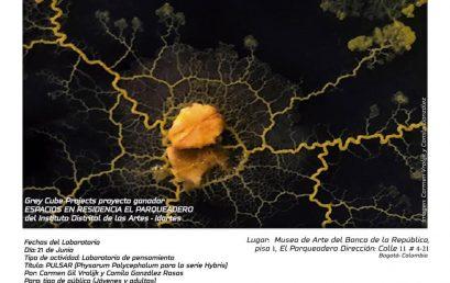 Laboratorio de pensamiento: Híbridos (Arte y Ciencia) Por Carmen Gil Vrolijk  y Camila González Rosas