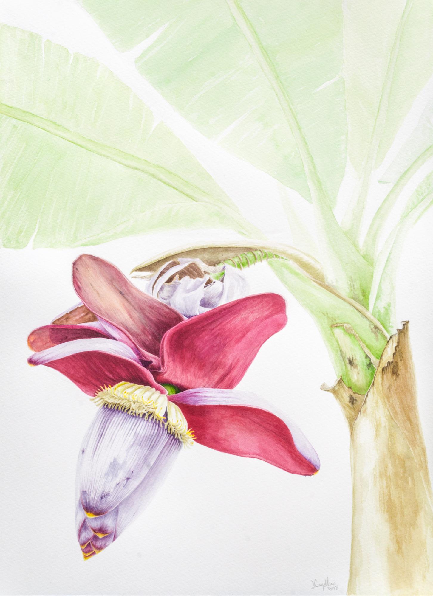 Curso Ilustración botánica: conocer las plantas a través del arte