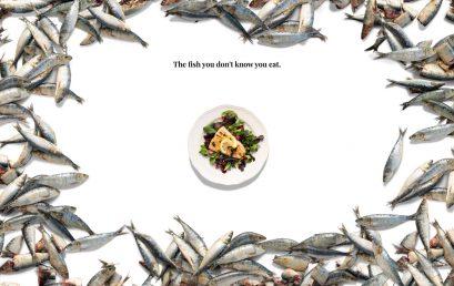 """""""La acuicultura no salvará el mundo"""", según reportaje de estudiantes de Periodismo con el Global Reporting Program"""