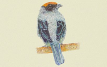 La Guía ilustrada de las aves de la Universidad de los Andes premiada por Andigraf
