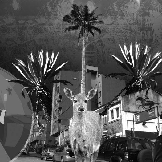 Introducción a la fotografía análoga en blanco y negro