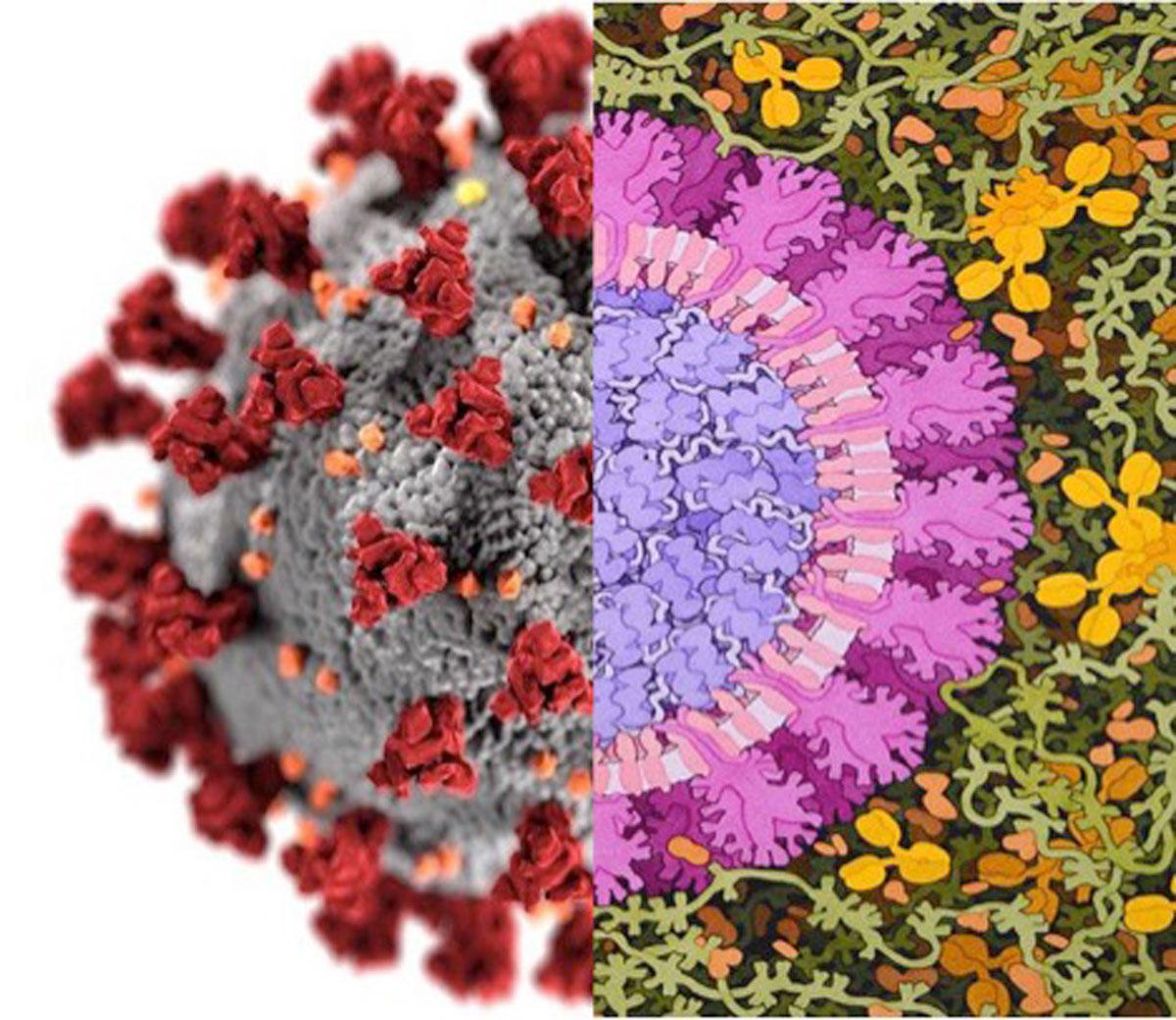 ¿Cómo representar al Coronavirus?